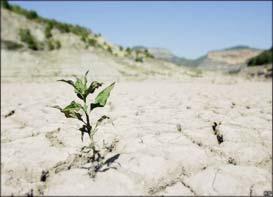 پرداختتسهیلات خشکسالی ۶٫۵میلیونی به کشاورزان شهرستانمُهر